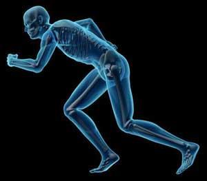 肌肉过度发达不利于健康