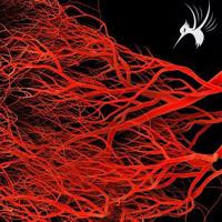 培养腹膜微血管内皮细胞大概步骤
