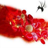临床输血技术规范及基本原则