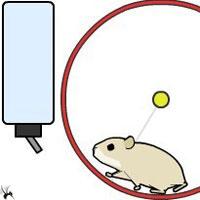 aBowman在线flash之仓鼠