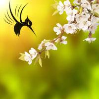 春天样的flash春天样的logo